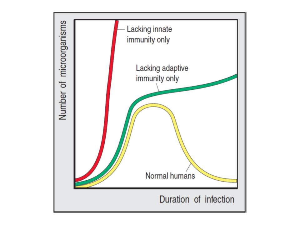 The importance of the innate immunity